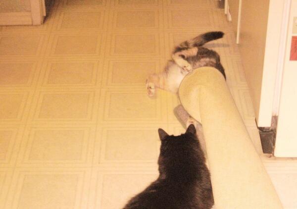Соня проверяет новый кошкин дом