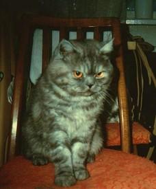 Вредный кот Пуся