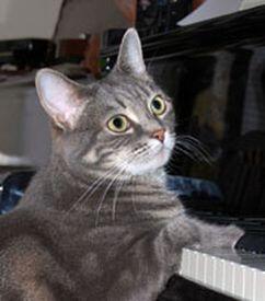 Кошка-пианистка Нора