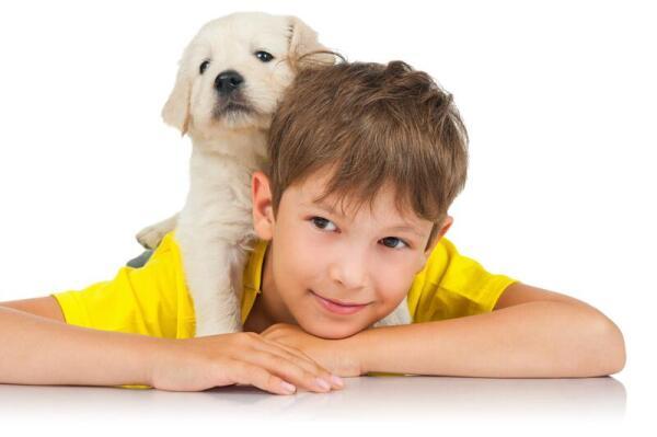 Собака в доме - польза или вред?
