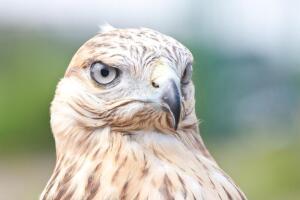 Зачем американские военные вкладывают деньги в механических зверей и птиц?
