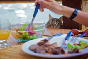 Криминальный талант котов. Почему они воруют?