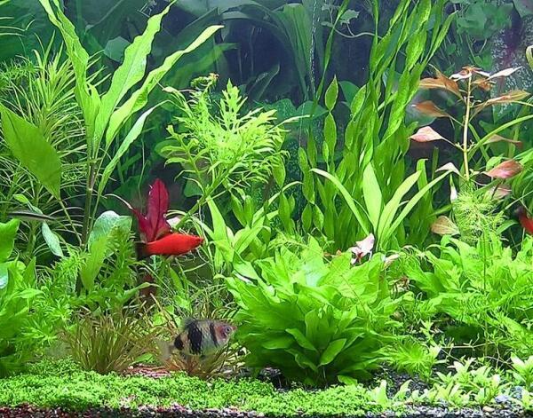 Удивительный мир аквариума