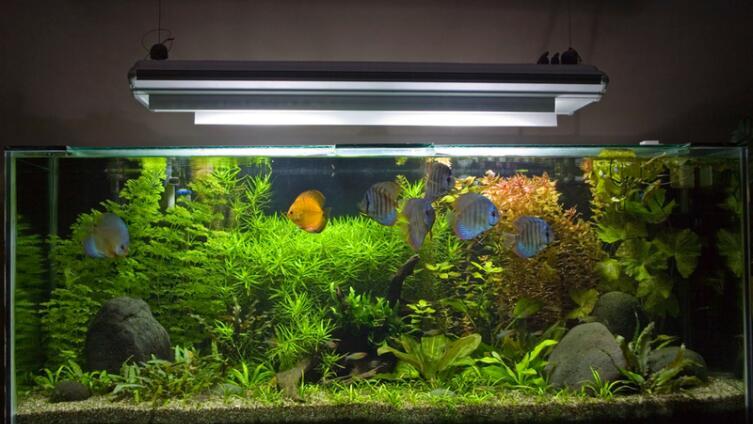 Выбираем аквариум. Каким он должен быть?