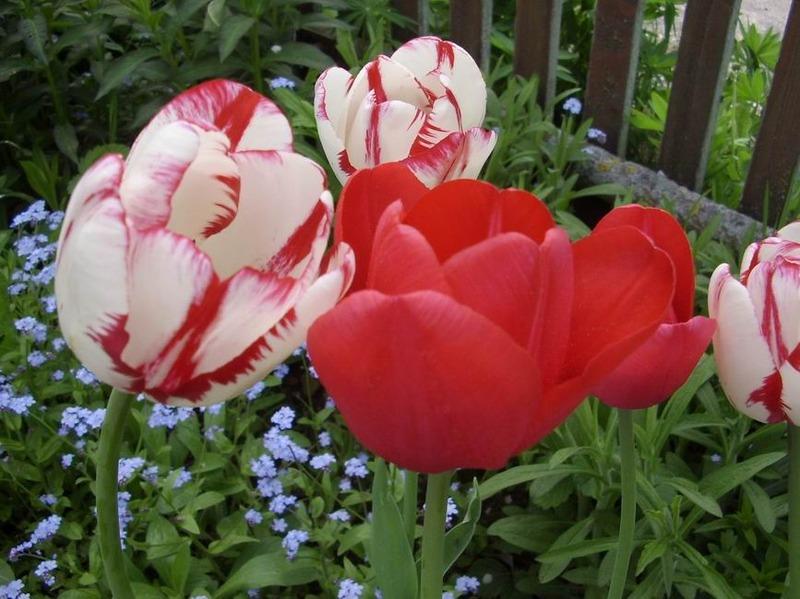 Что цветет в мае?