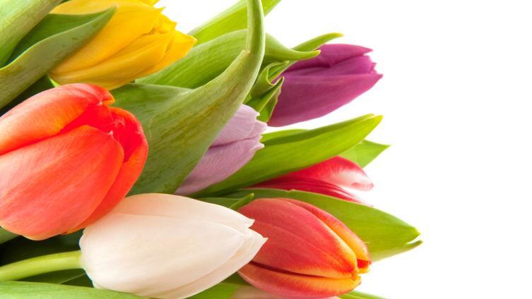 Рубенс, «Четыре философа». О чем говорят тюльпаны?