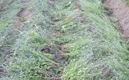 Гребни укрываем сеном