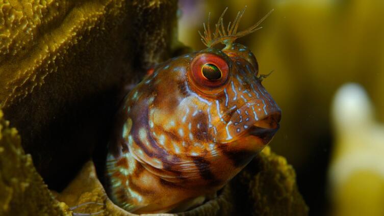 Как оформить аквариум?