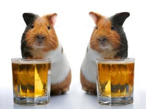 Алкоголь: ну сколько можно спорить? De vino veritas!