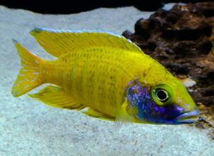 Биологическое равновесие в аквариуме. Что это такое?