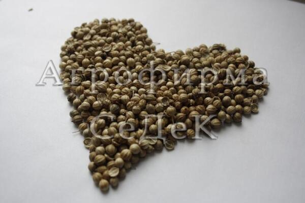 Ароматные семена кориандра