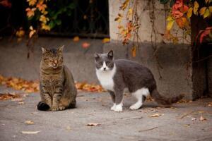 Как размножаются кошки? Полигиния, полиандрия и прочий промискуитет