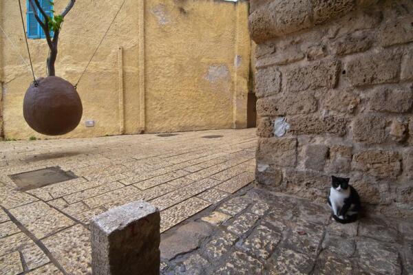 Чем привлекательны путешествия по Израилю?