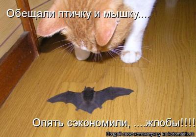www.kotomatrix.ru