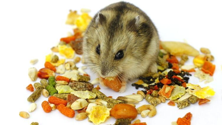 Что едят хомяки?