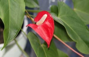 Как ухаживать за домашними растениями?