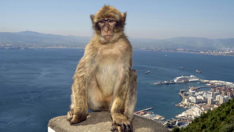 Есть ли боги и герои среди... обезьян?