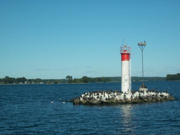 Островок - птичий дом