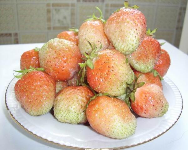 Розовоплодный сорт Ананасная розовая