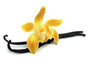 Ванильная орхидея и шоколадник —  дружба навеки. Как это произошло?
