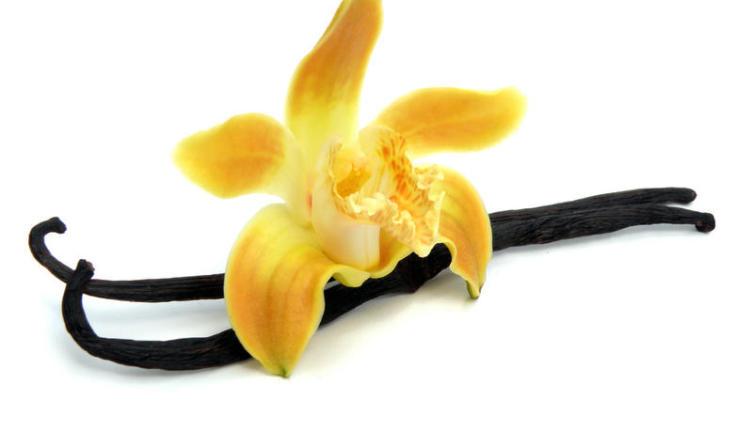 Ванильная орхидея и шоколадник - дружба навеки. Как это произошло?