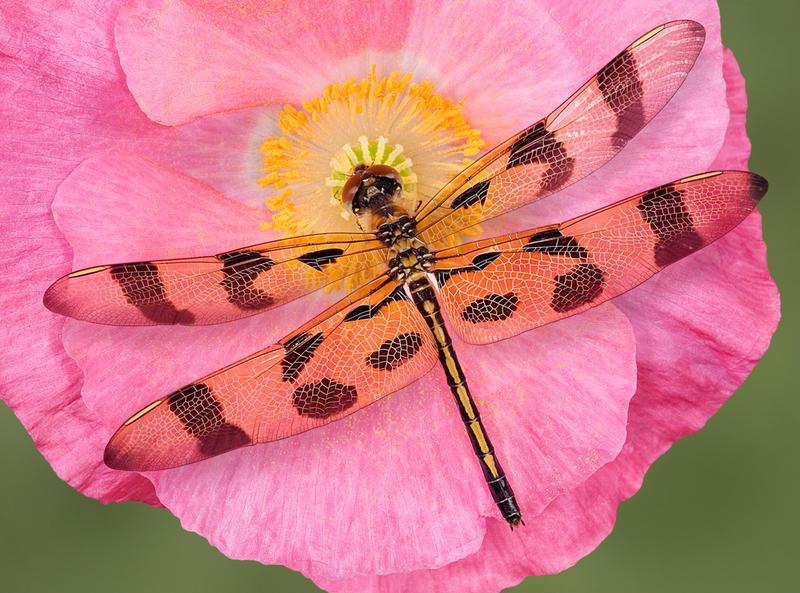 Какие насекомые были первыми летунами и гигантами?