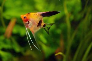 Как оборудовать пресноводный  аквариум? Личный опыт