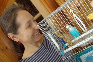 Как научить попугая-девочку разговаривать?