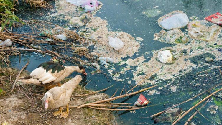 Каковы  источники и виды загрязнения поверхностных вод суши?