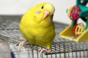 Как мыть клетку для попугая?