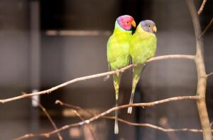 Как определить возраст и пол попугаев?
