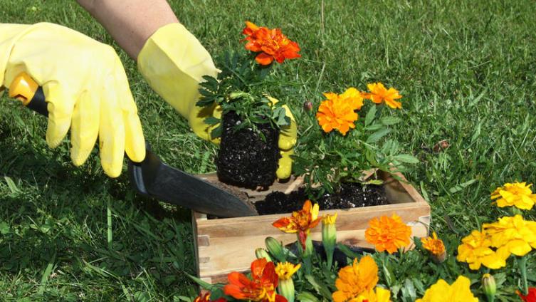 Как очистить руки и ногти после работы в саду?