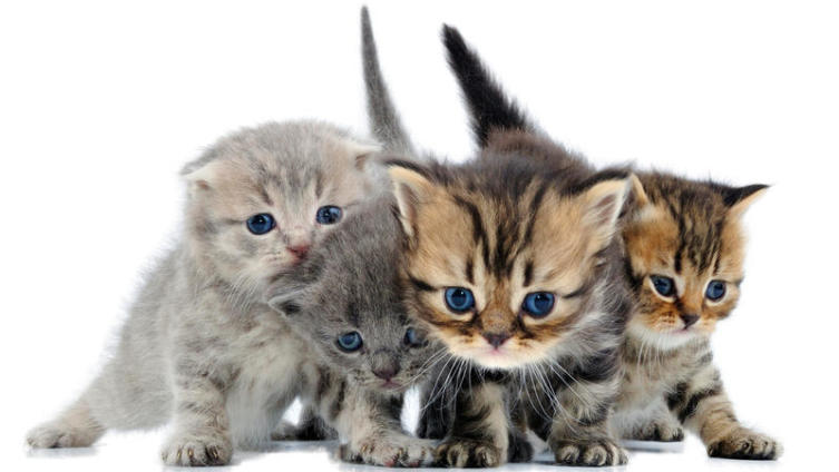 Как выбрать здорового котенка?