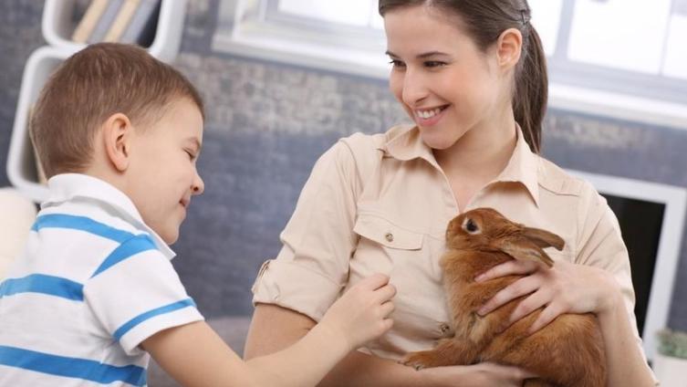 Как кормить домашнего кролика?