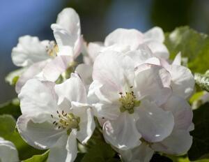 Как спасти сад? О райском саде, прекрасной бабочке и ее прожорливых детках