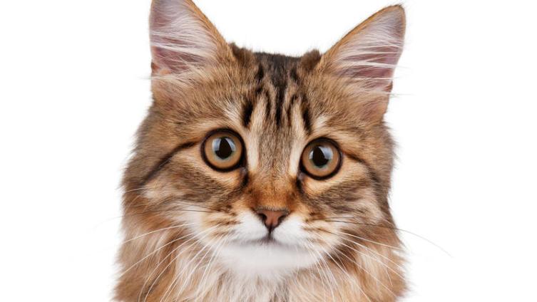Как выбирать между котом и кошкой?