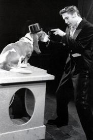 Элвис и пёс Шерлок на шоу Стива Аллена