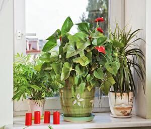 Фэн-шуй: где какому растению в доме место?