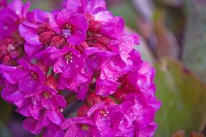 Тенистый сад. Как превратить его в цветущее королевство?