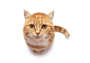 Как отучить кошку царапаться?