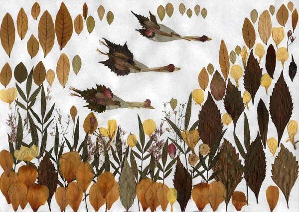Картинки или раскраски поздняя осень