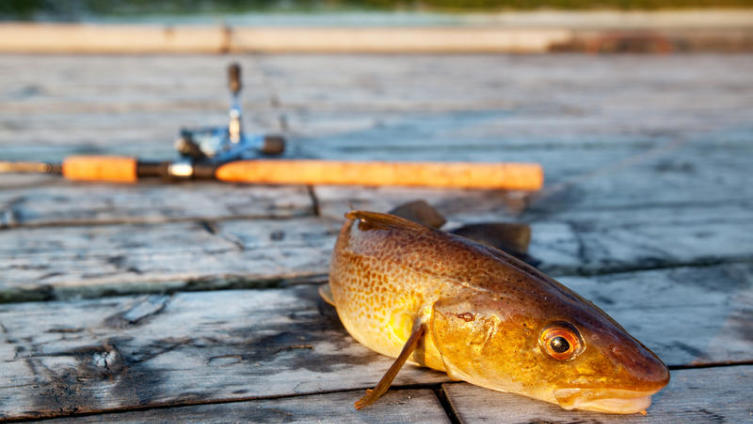 Как хранить рыбу без холодильника?