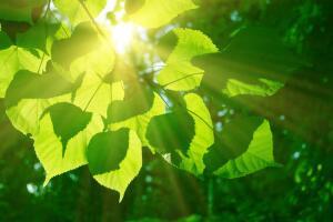 Откуда на Земле кислород и какова природа зрения? Фотохимия