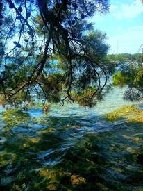 Морские сосны