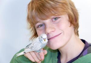 Как приручить волнистого попугая?