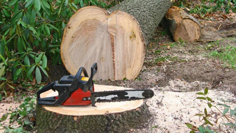 Почему День работника леса отмечается в третье воскресенье сентября?