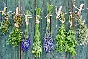 Пряные растения - щедрый дар Природы. Чем они полезны? Часть 1
