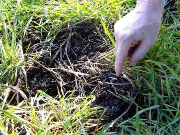 Мульча— основа плодородия и защита от высыхания почвы