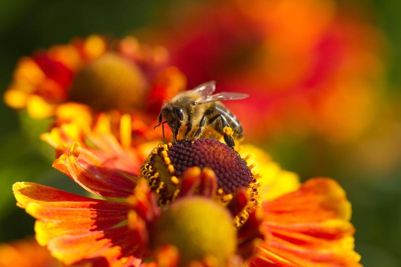 piotrwzk,  Shutterstock.com