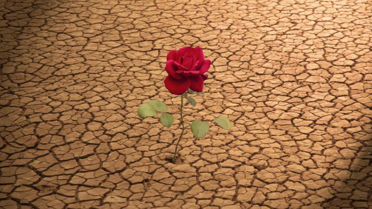 Как Стинг написал о форме своего сердца и Розе Пустыни?